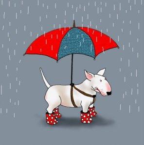 paraply hund
