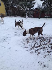 första snön2013